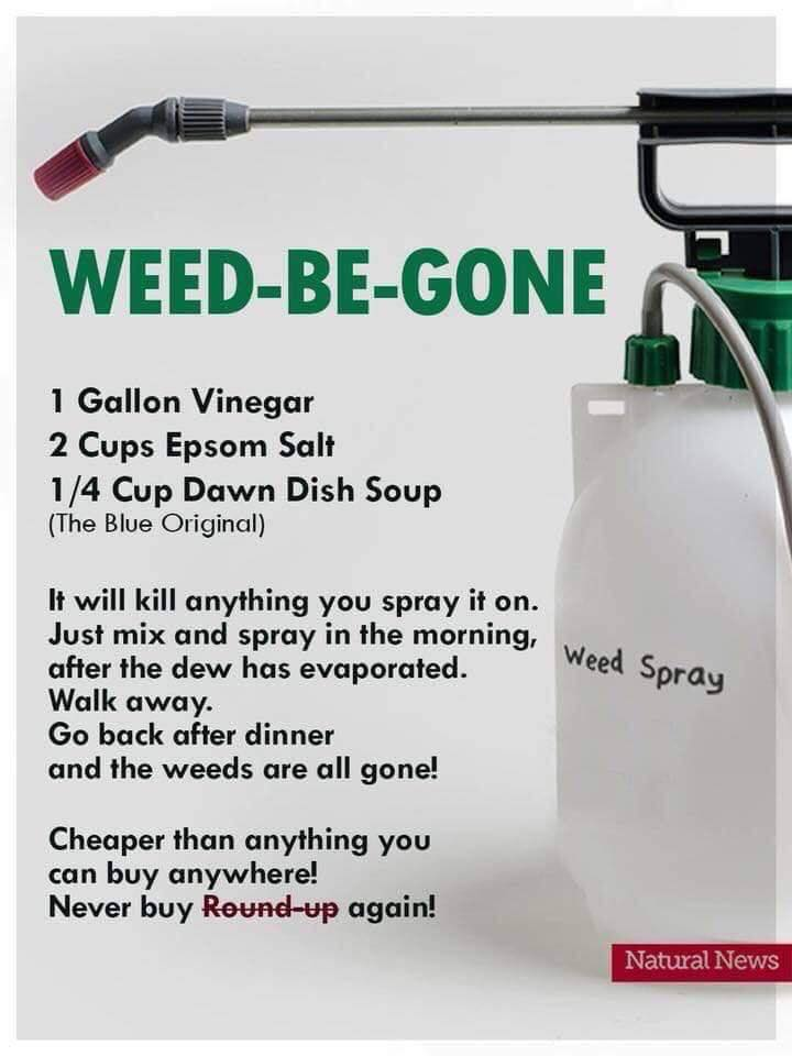 #145 KILL WEEDS WITHOUT CANCER CAUSING ROUNDUP WEED KILLER